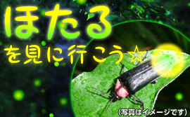 banner-hotaru.jpg