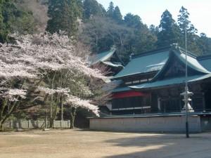 hasikurasakura.jpg
