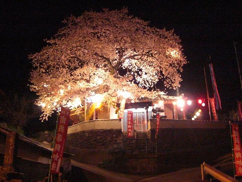 yakushiansakura1.jpg