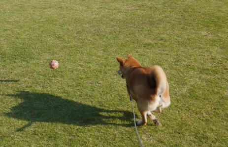 3ボール拾い