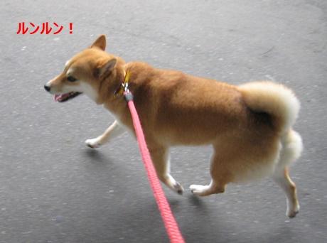 2お散歩楽しい・・・