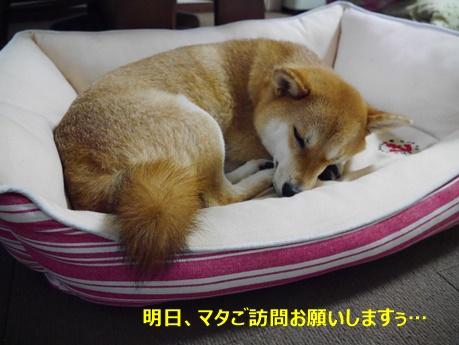 3お休みなさい