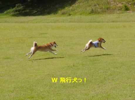 1W飛行犬