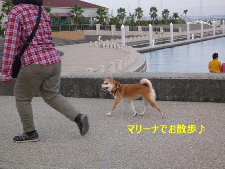 6マリーナお散歩