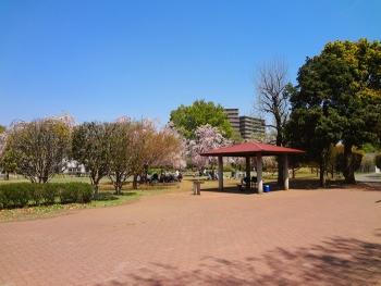 桜目当てに散歩しました [公園編]