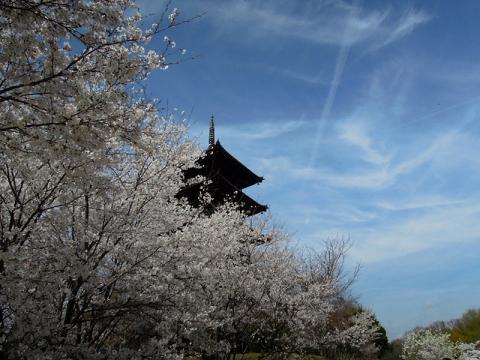 DSCN8484コンデジ 塔と桜