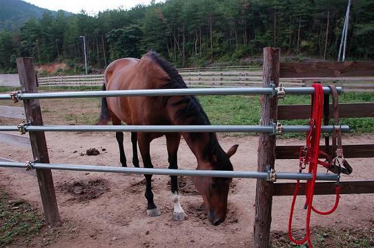 DSC_0848引退馬