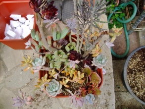大きな寄せ植えができました♪なんだかテンデンバランバラ~ン\(~o~)/育つうちに何とかなってくる♪多肉植物の良いところ~\(~o~)/2014.04..20