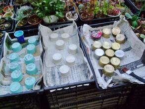 猫の餌缶がたくさんあるのでこっそりリメ缶チャレンジ中~下地剤、アクリル絵の具、カラーセメント♪乾かし中~2014.02.23