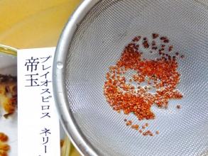 帝玉干からびた種を一日水に浸して開かせて種を取りました。2014.08.30