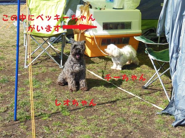 07_2014032405032403b.jpg