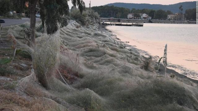 【画像】 ギリシャでクモが大量発生 町がクモの巣で覆われるwwwwwww